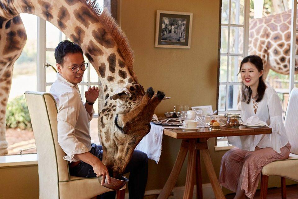 Giraffe-Manor-Couple-Engagement-Portrait-Photography_0040.jpg