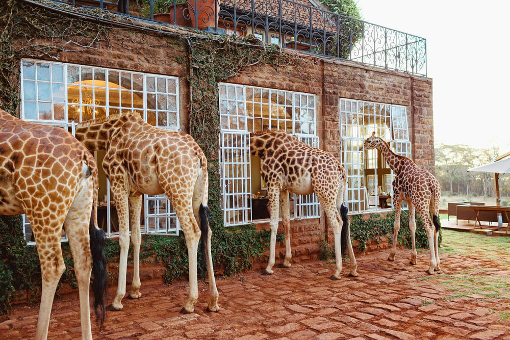 Giraffe Manor Nairobi Destination Engagement Photographer