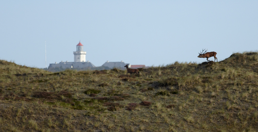 HANSTHOLM FYR -NATIONALPARK THY.jpg