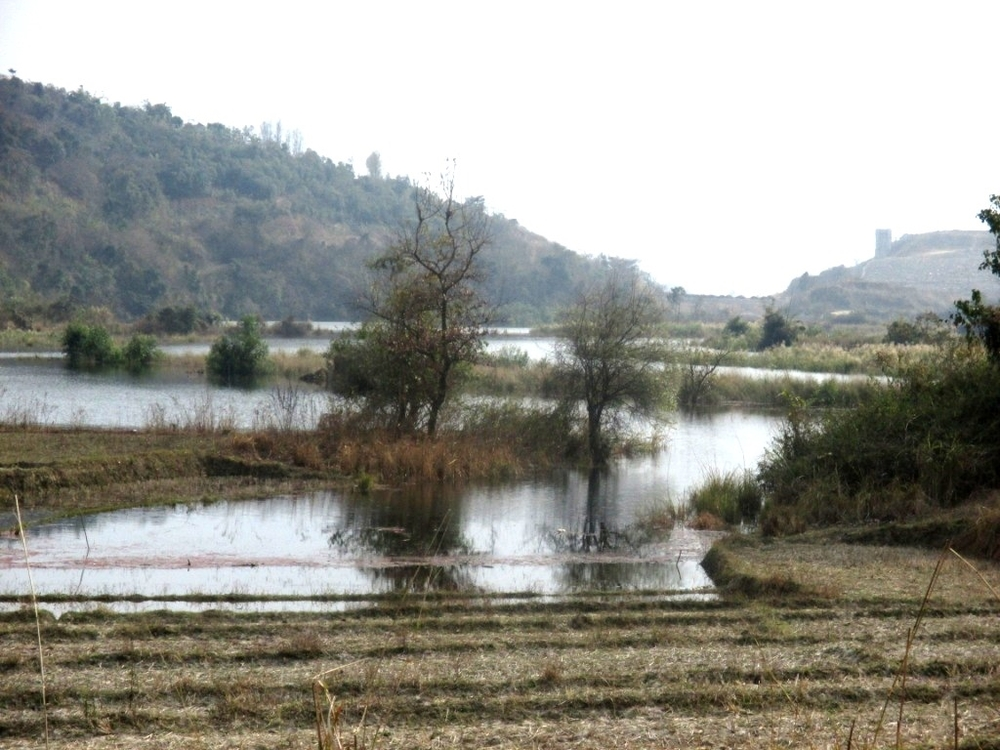 Rising water level of Mapithel Dam submerging agriculturre  land in Louphoung Village