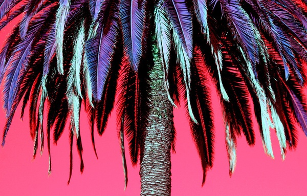 http://society6.com/DerekFleener/Warped-Colors-Palm-Tree_Print