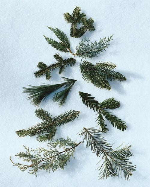 Christmas Tree Glossary