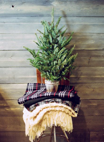 Mini Tree and plaid