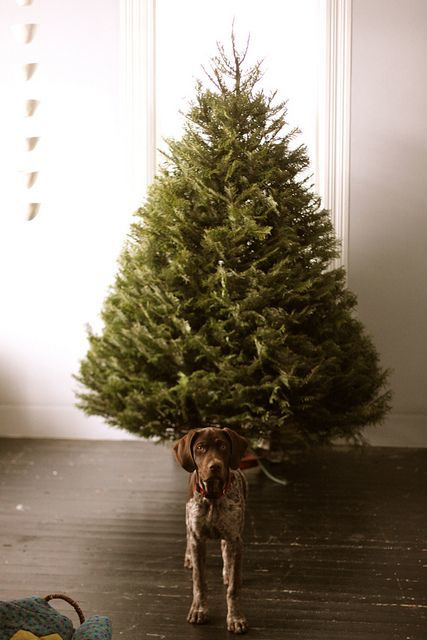 Christmas tree guardian