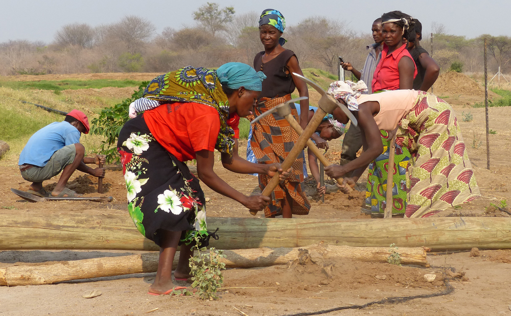 Digging and planting is a major activity in the Lower Zambezi's dry season.