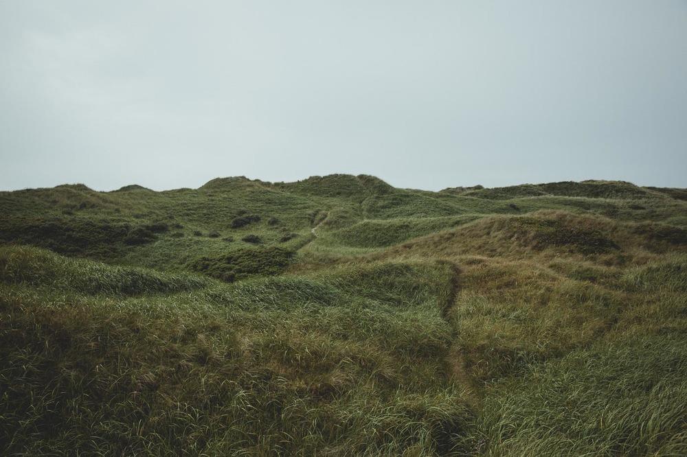 Green Gras © Alan Thomas Duncan Wilkie-1.jpg