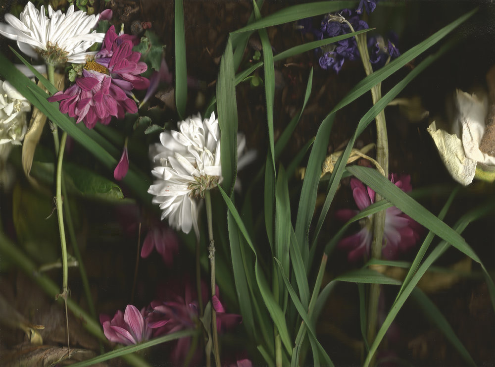 untitled (asters, grasses)