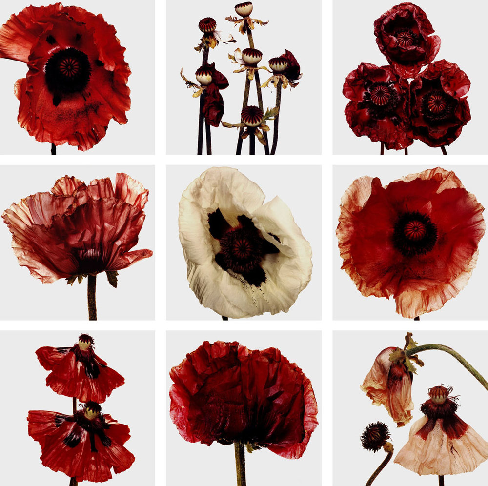 Irving-Penn_Flower_3.jpg