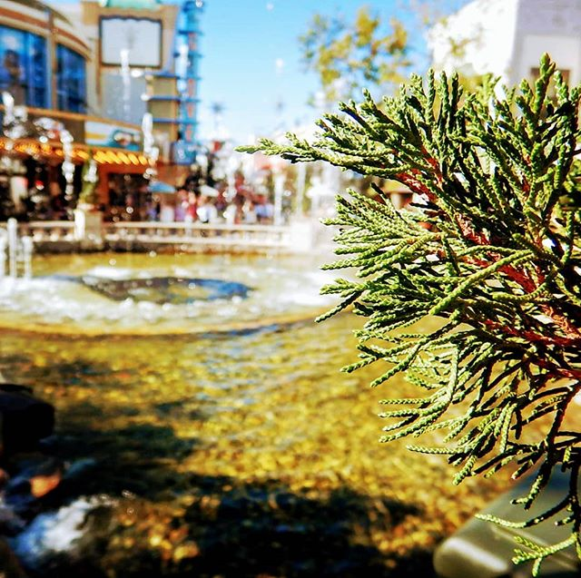 Another SoCal staple, the sprawling, Sunkist, intoxicating and bewildering outdoor mall! .  The most incredible people watching in the world and also particularly fun if you have lots of money in your pocket you don't want to keep and you want to buy some stuff you probably don't need or buy something beautiful for someone that they probably don't need that either... . You could at least wrap it in some non store bought wrapping paper! . I've given four gifts so far this holiday season and all were wrapped quite skillfully in materials I've found laying around at the school and at home. . Santa, Rudolf and planet will thank you. . . #wrappingpaper #trees #exploremore #teacherlife #iteach #gardening #sustainability #recycle #plant #iteachtoo #teachersofinstagram #teachersfollowteachers #sustainable #optoutside #teacherspayteachers #ecofriendly #sustainablefashion #teachersofig #ecofashion #rei1440project #ethicalfashion #getoutside #tpt #eco #getoutstayout #garden #plants #keepitwild #theoutbound #iteachk