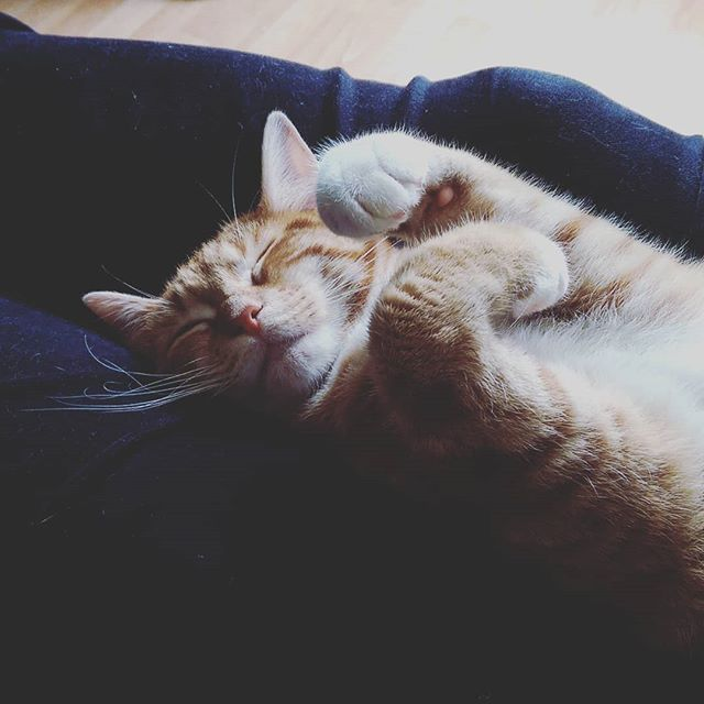A Cat's Life.. #cat #catsofinstagram #cute #sleepingbeauty