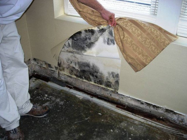 What To Do When You Find Mold In Your House RE MAX Alliance Colorado Mov