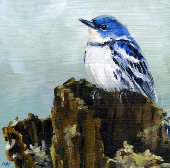 blue-warbler.jpg