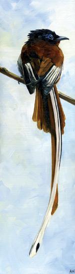 madascar-paradise-flycatcher.jpg