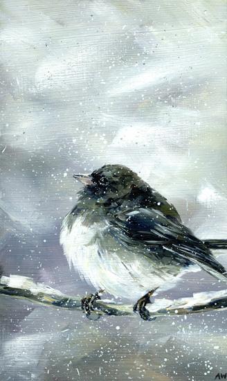 junco-in-snow-2013.jpg