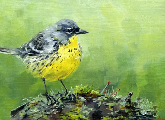 warbler-on-mossy-rock.jpg