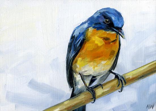 tickells-blue-flycatcher.jpg