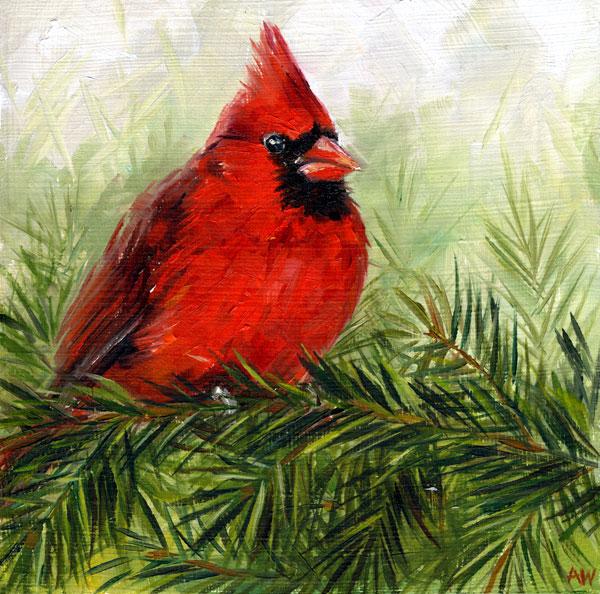 cardinal-pine.jpg
