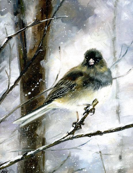 junco-in-snow.jpg