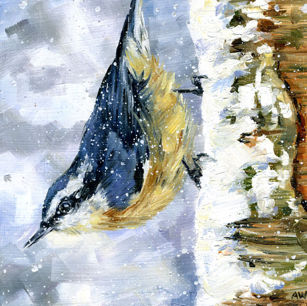 nuthatch-in-snow.jpg