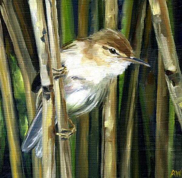 reed-warbler.jpg