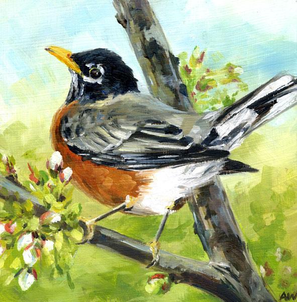 robin-spring.jpg