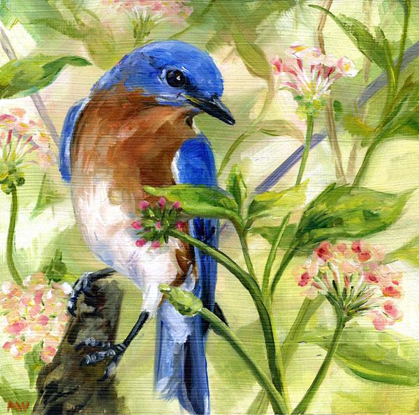 verbena-bluebird.jpg