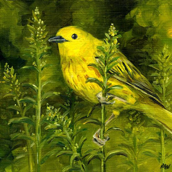 yellow-warbler.jpg