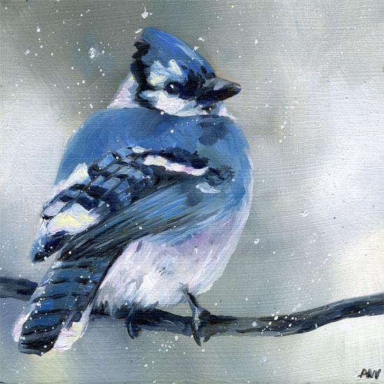cold-bluejay-2010.jpg