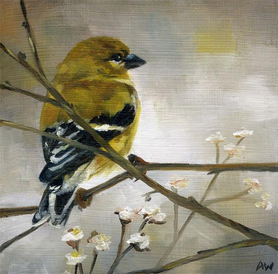 female-goldfinch.jpg
