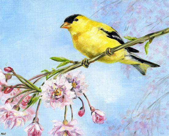 goldfinch-in-cherry-tree.jpg