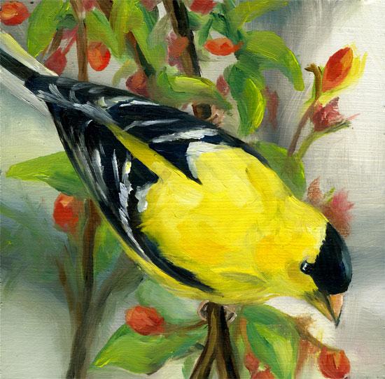 goldfinch-on-flowrs-09.jpg