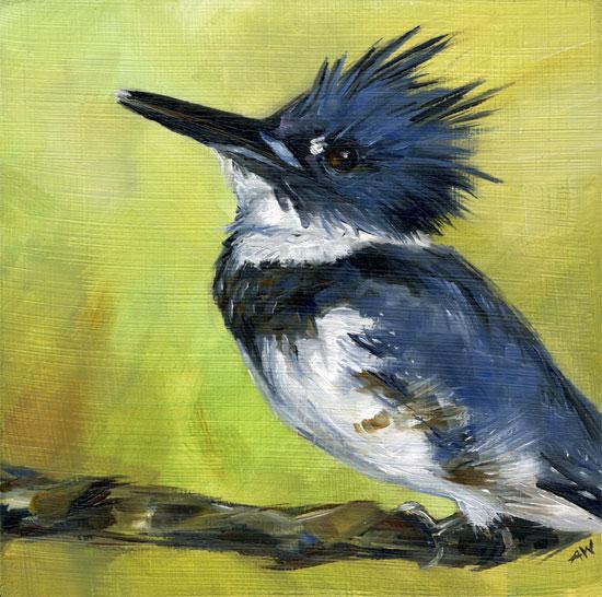 kingfisher-male.jpg