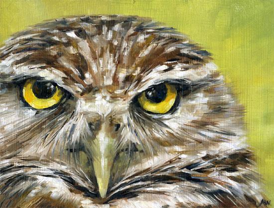 owl-eyes-2011.jpg