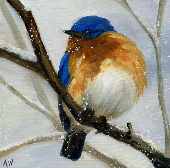 winter-bluebird-09.jpg