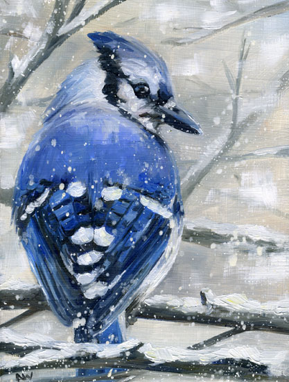 bluejay-snow-2011.jpg