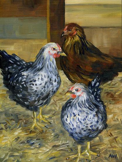 chickens-350.jpg