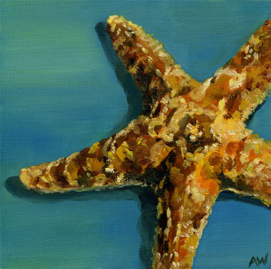 sugar-starfish-408.jpg