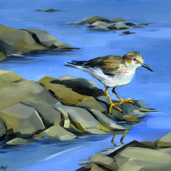 lesser-yellowlegs-on-rocks.jpg