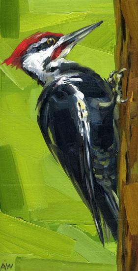 pilated-woodpecker.jpg