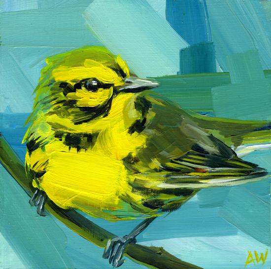prairie-warbler.jpg