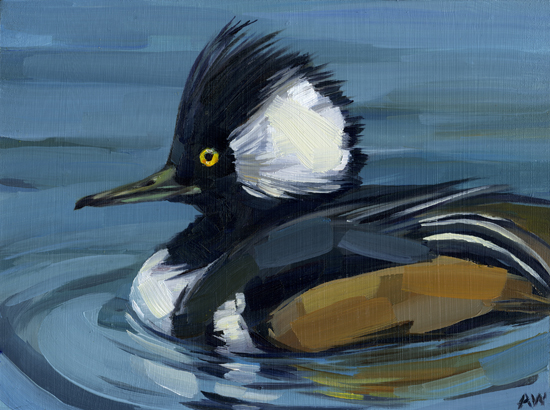 hooded merganser.jpg