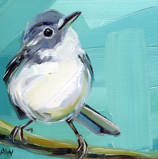blue-gray-gnatcatcher.jpg