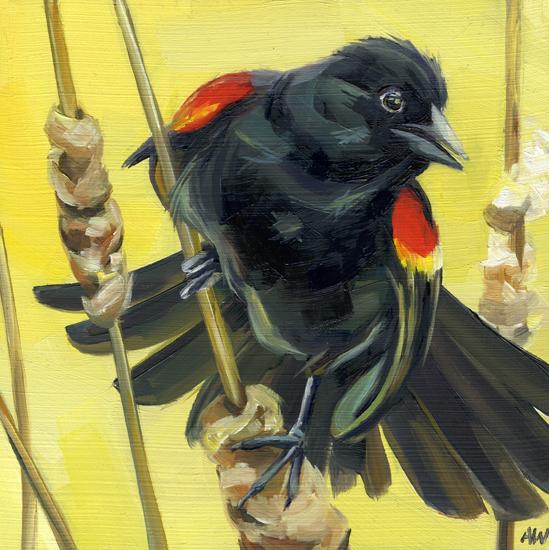 red-winged-blackbird.jpg