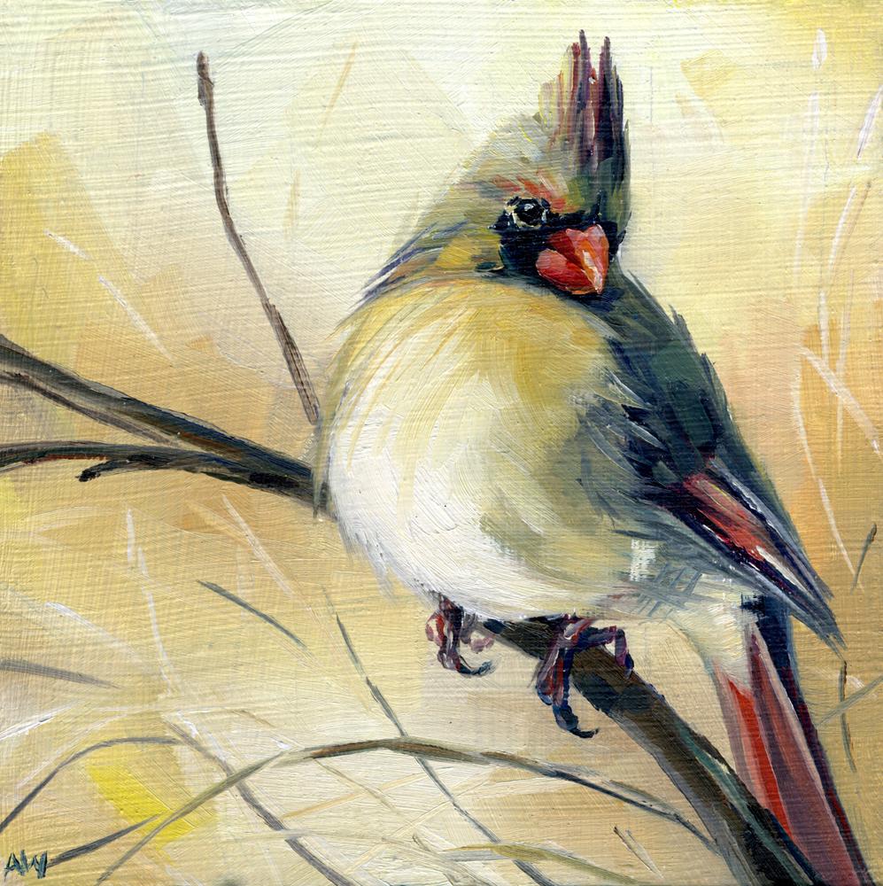 female-cardinal.jpg