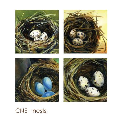 nests.jpg