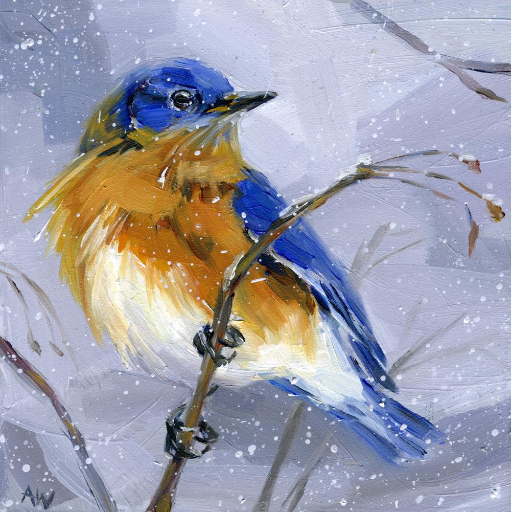 bluebird-in-snow.jpg