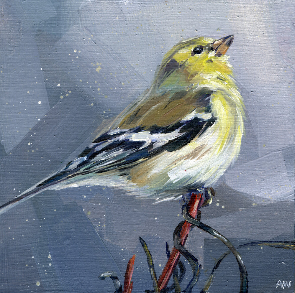 winter-goldfinch.jpg
