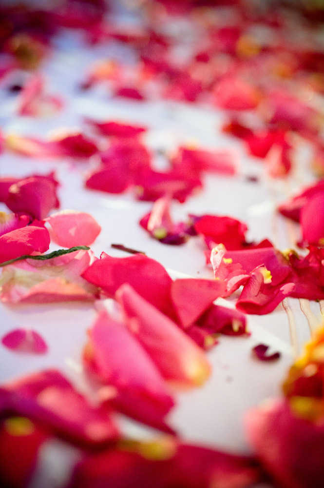 Wedding isle rose pedals