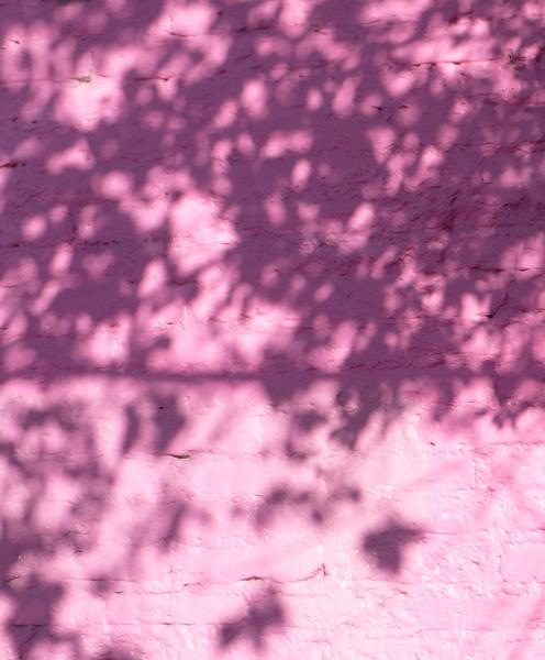 pinktree.jpg