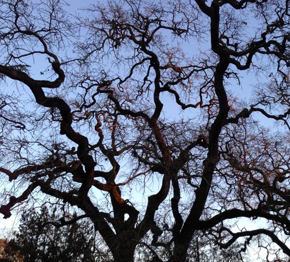 branches1.jpg